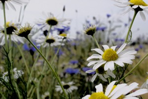 Organicly sourced wild flowers